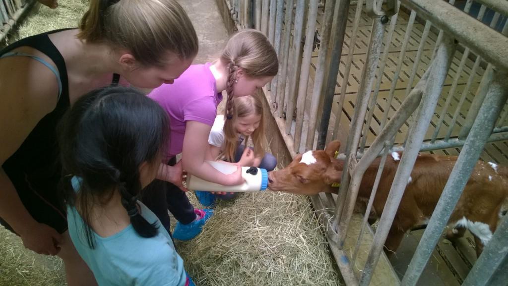 Maitotilalla lapset pääsivt syöttämään vasikoita tuttipullosta.